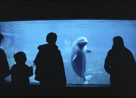 Comment répondre aux questions des enfants sur les baleines