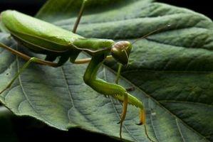 Faits sur les différents types d'insectes