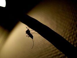 Effets et utilisations du DDT comme insecticide