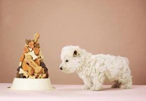 Idées de nourriture pour une Littlest Pet Shop Party