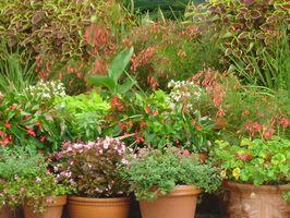 Comment louer Plantes en pot