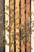 Comment faire un nid d'abeille intérieur de votre maison