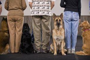 Comment former les chiens qui sont pas traiter motivés
