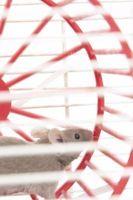 Comment faire un Cage souris pour les enfants