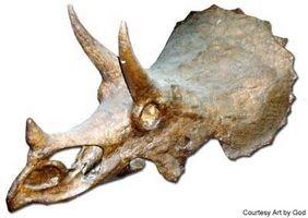 Comment repérer fossiles de dinosaures