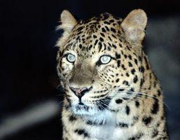 Comment faire des taches de léopard avec le maquillage