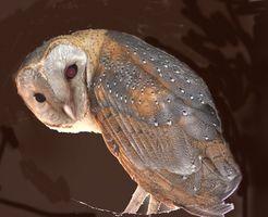 Faits à propos de Owl Pellets