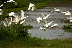 Oiseaux indigènes qui vivent en Floride