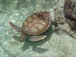 Types de reptiles marins