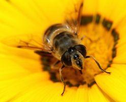 Comment puis-je obtenir des terres pour l'apiculture?